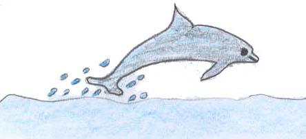 wie alt werden delfine